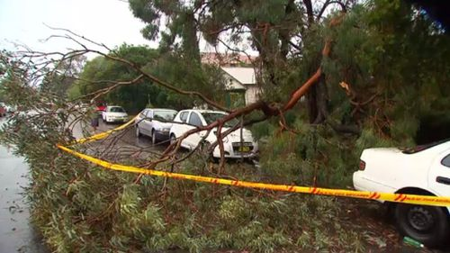 A man was sheltering from the storm in his car on Shadforth Street in Wiley Park when a large branch broke off  and smashed the windscreen of the car. (9NEWS)