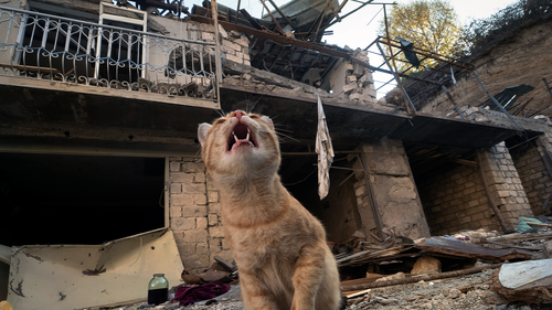 A cat sits in the yard of a house destroyed by shelling by Azerbaijan's artillery  during a military conflict in Stepanakert, the separatist region of Nagorno-Karabakh, Tuesday, Oct. 13, 2020.
