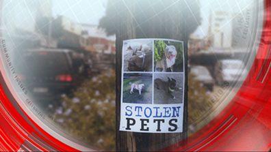Stolen pets