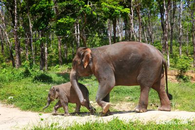 <strong>Elephant Nature Park, Thailand</strong>
