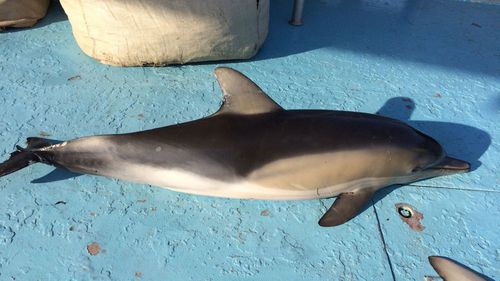 Two NSW councils have called on the state government to remove shark nets that trap other marine life such as dolphins.
