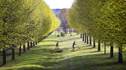 These German children are dramatically outweighed by the trees and grass around them. (AAP)