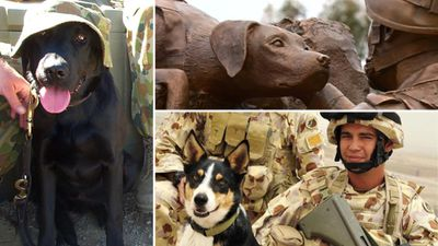 <p>Australian military dog Razz (left), dog Herbie and handler Sapper Darren Smith are among those  killed during service. They were honoured with a sculpture at the Australian War Memorial (top), unveiled in October 2015. </p>