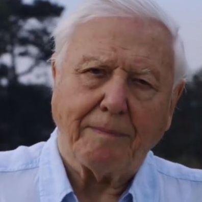 David Attenborough makes his Instagram debut.