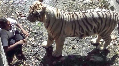 An Indian student has been killed by a white tiger after falling into its enclosure at Delhi Zoo.