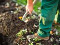 How to make sure your new vegetable seedlings survive