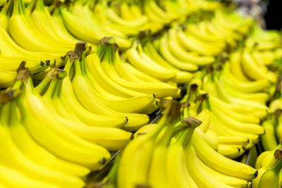 Bananas are great for your gut bacteria