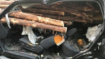Driver in Georgia is lucky to be alive are rear ending a log truck.