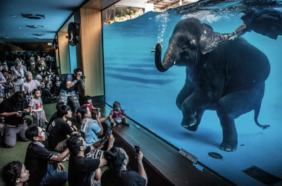 'Elephant in the room'. Winner - Photojournalism.