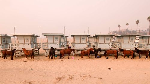 Horses are tied to lifeguard booths on the beach in Malibu.