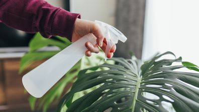 5 mistakes people make with indoor plants