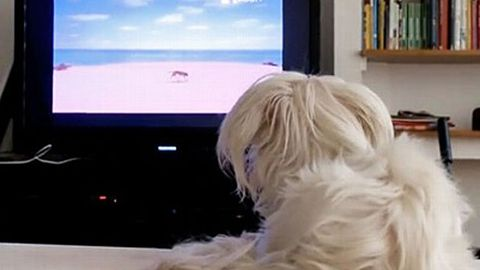 DOG TV: Cable channel for dogs launches in the US