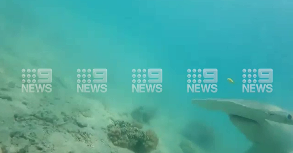 Diver fights off hammerhead shark with camera on Queensland reef – 9News