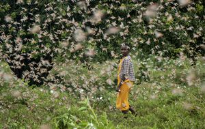 Africa's worst locust outbreak 'far from over'