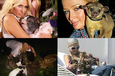 As well as her micro pig, Paris has an extensive collection of animals including dogs, cats, rabbits, an opossum, and a parrot. At one stage she even had a pet kinkajou – a racoon-like animal called Baby Luv (top right) – that had to be handed over to the authorities after it attacked her.