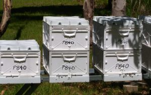 Beehive heist lands man in court after two-year police investigation