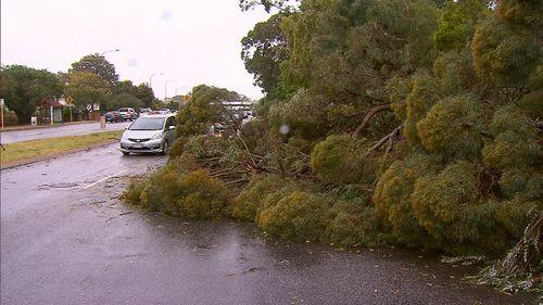 Winds tore down trees, blocking roads.