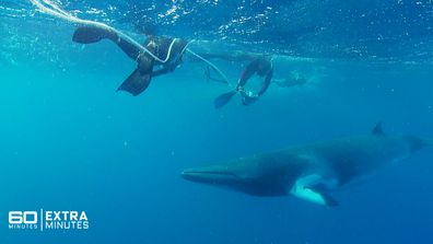 Extra Minutes | Allison Langdon's breathtaking underwater dive with the Dwarf Minke Whale
