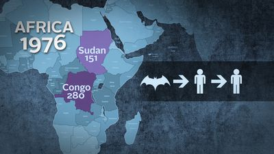 <b>Where did Ebola come from? </b> The first reported cases of Ebola were in the Sudan and the Democratic Republic of Congo where they killed 151 and 280 people respectively. Particular bats living in tropical African forests are believes to be natural Ebola hosts. Once a human is infected, it is easily transmitted between people in close contact.