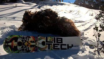 Chewbacca attack