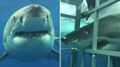 'We have to cull them now': Debate over shark safety heats up