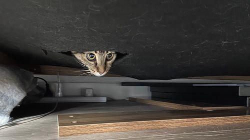 Cat earthquake