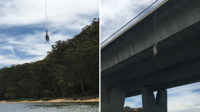 'Oh my God, why would someone do this?': Deer left hanging from bridge