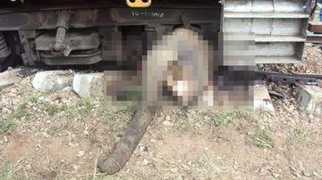 Elephant killed by train in Sri Lanka.