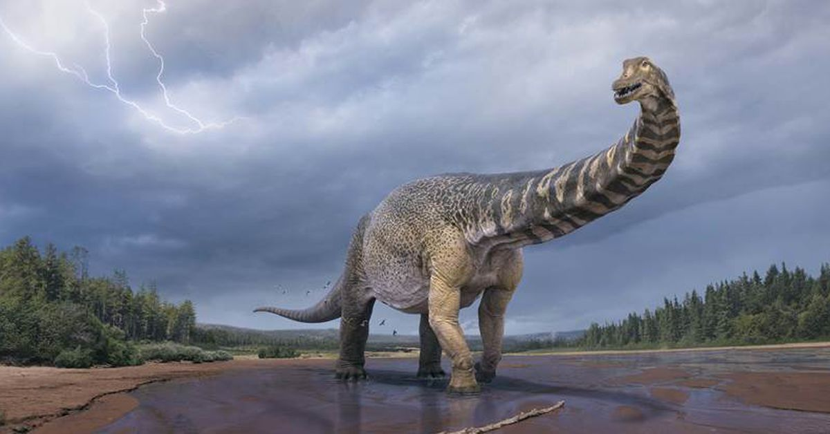 'Cooper' the titanosaur as big as a basketball court recognised as Australia's largest dinosaur – 9News