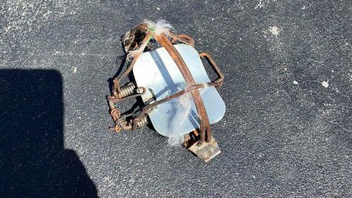The cat was trapped in this device left on a street in Sydney's Canterbury.