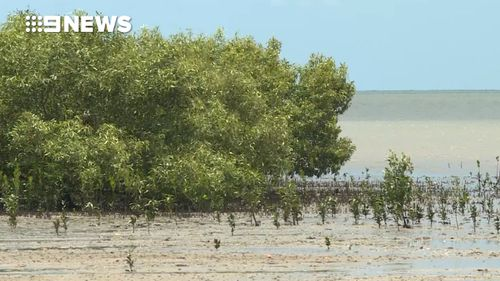 Rangers are urging people to stay away from all waterways in Far North Queensland. (9NEWS)