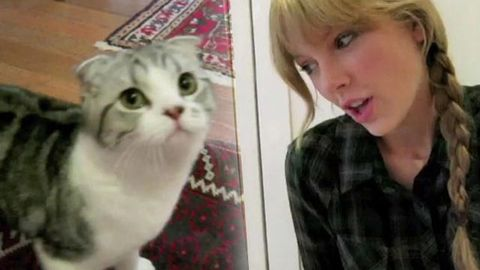 Watch: Taylor Swift uses her cute kitten to drum up votes for the Country Music Awards