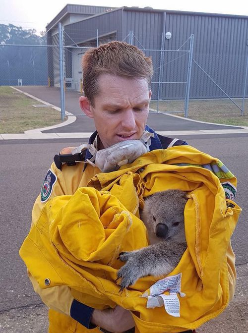 Firefighter Jarrod Chipperfield was photographed holding the marsupial after the rescue. (Facebook)