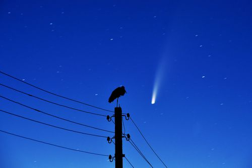 Comet Neowise.
