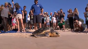 The rescue mission of Yosemite the loggerhead turtle ended on a high today.