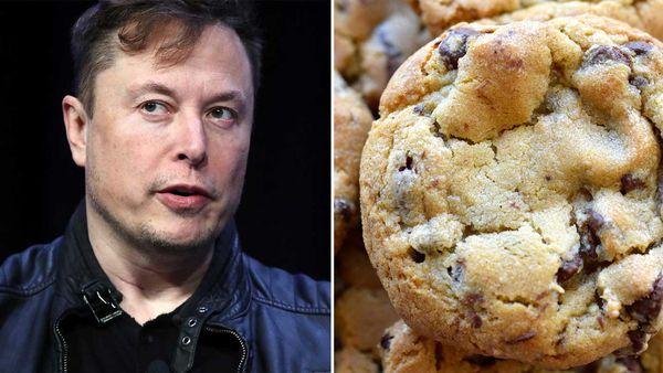 Elon Musk / chocolate chip cookie
