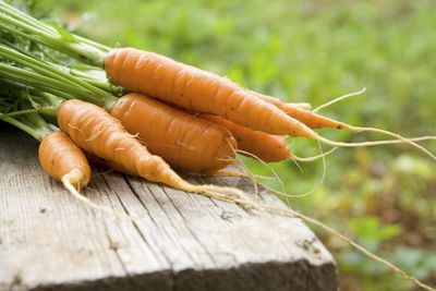 <strong>Carrots</strong>