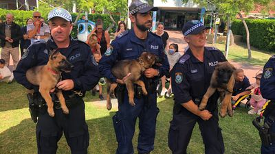 Introducing the newest members of the NSW Police force