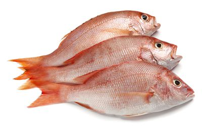 Snapper (and other fish and seafood)