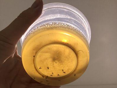 How to get rid of fruit flies using DIY method