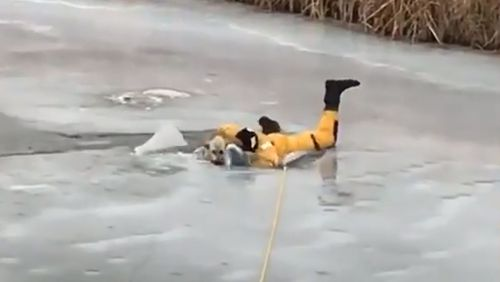 The ice breaks beneath the firefighter as he tries to help the stranded dog.