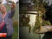 Council-owned tree causes $20,000 damage to pensioner's home