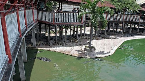 Thai woman dies after leaping into crocodile pond at tourist attraction