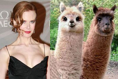 Nicole Kidman has alpacas on her farm.