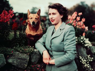 The Queen with a corgi in 1952
