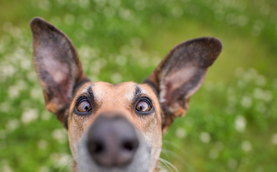 Photo by Elke Vogelsang.