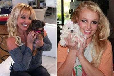 Britney sure knows how to pamper her puppies, spending $33,000 in 2013 alone on her new pooches, a white Maltese terrier and a Yorkshire terrier.<br/><br/>According to legal docs filed for her conservatorship, Britters bought the pups for $14,000 and spent $1700 on doggy clothes, $5600 on a dog-sitter and the rest on food and general upkeep.<br/><br/>Images: Twitter