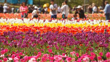 Floriade 2021 in the ACT has been cancelled because of the Delta coronavirus threat.