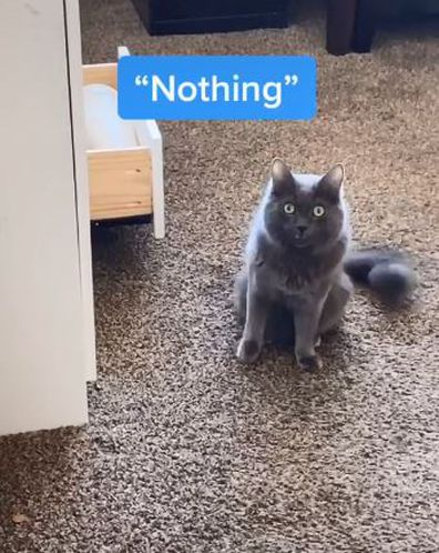 Mikey the talking cat