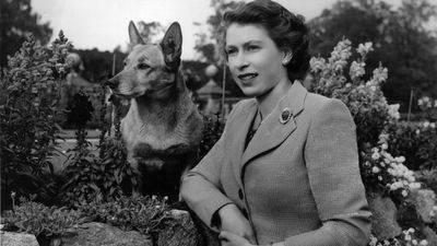 "Queen Elizabeth and her corgis<span style=""white-space: pre;"">	</span>"